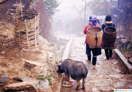 caminos-en-vietnam